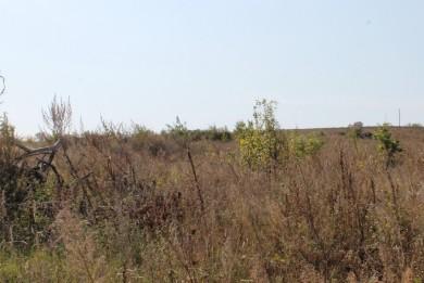 Десятки гектаров не вовлечены в сельскохозяйственный оборот