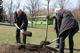 К 100-летию государственного контроля Беларуси в столичном парке Победы заложена ясеневая аллея