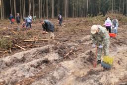 Работники Комитета госконтроля Могилевской области приняли участие в ежегодной республиканской акции «Неделя леса»
