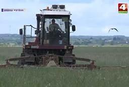 Первый укос трав завершается в Берестовицком районе (телеканал «Беларусь-4», программа «Новости Гродно»).