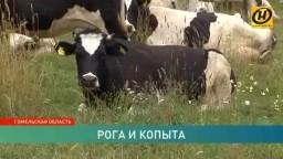 Несанкционированное кладбище животных обнаружено в лесу в Гомельской области телеканал ОНТ