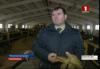Комитет госконтроля проверяет сельскохозяйственные объекты (телеканал «Беларусь-1», программа «Панорама», 21-20)